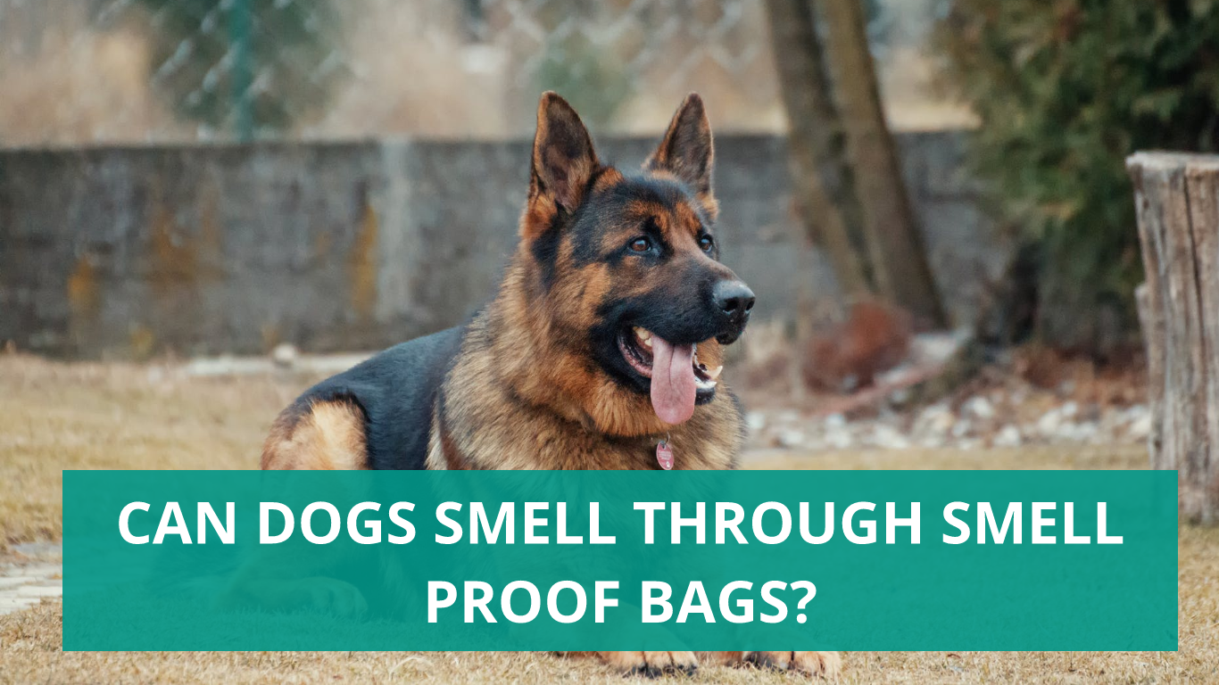 Can dogs smell through smell proof bags 2